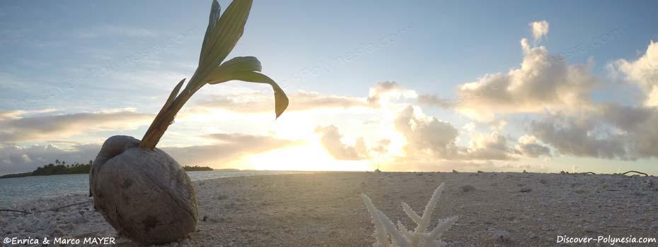 Polinesia, quando andare?
