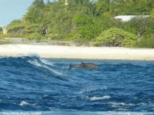 Rangiroa-Polinesia21